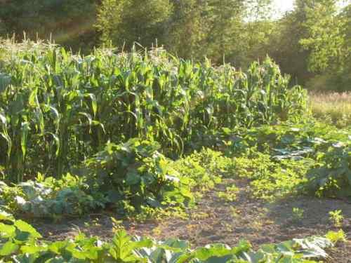Grandma Beulah's vegetable garden