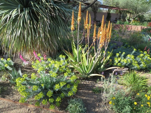 Spring color in the desert at Boyce Thompson Arboretum's demonstration gardens.